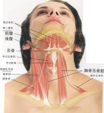 声の筋肉.jpg